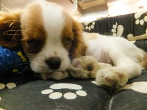 A young puppy has very little bladder control.